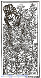 Monarch Butterfly with Flowers Wood Mounted Rubber Stamp NORTHWOODS O8962 New