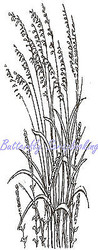 Ornamental Grass, Wood Mounted Rubber Stamp NORTHWOODS - NEW, D8074