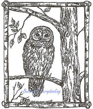 Owl in Birch Frame, Wood Mounted Rubber Stamp NORTHWOODS - NEW, M9057