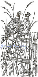 Pheasant Pheasants Fence Wood Mounted Rubber Stamp Northwoods Rubber Stamp New