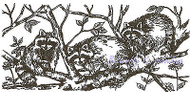 Racoons in Tree Wood Mounted Rubber Stamp NORTHWOODS Rubber Stamp O9527 New