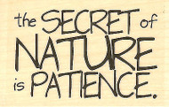 Secret of Nature Wood Mounted Rubber Stamp IMPRESSION OBSESSION Stamp C14187 New
