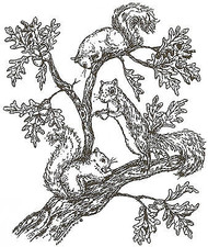 Squirrels In Tree Wood Mounted Rubber Stamp Northwoods Rubber Stamp New