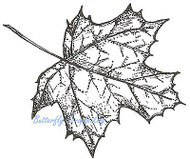 Sugar Maple Leaf, Wood Mounted Rubber Stamp NORTHWOODS - NEW, CC9217