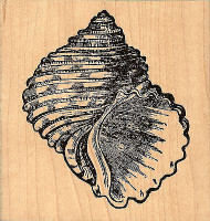 Turbo Sea Shell, Wood Mounted Rubber Stamp JUDIKINS, NEW - 3579G