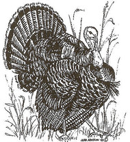 Wild Turkey Bird Wood Mounted Rubber Stamp Northwoods Rubber Stamp M7068 New
