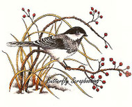 WINTER CHICKADEE ON BRANCH Cling Unmounted Rubber Stamp C.C. Designs JD1036 New