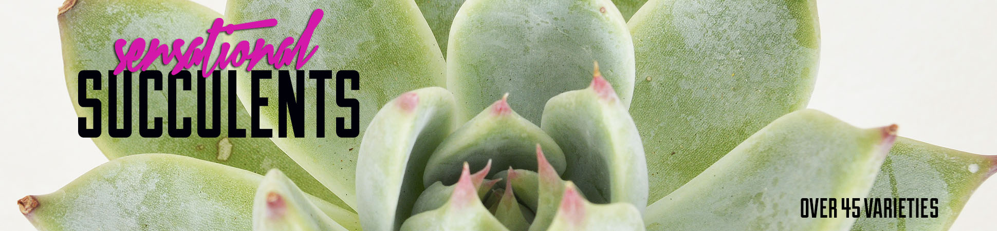 sensational-succulents.jpg