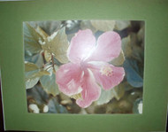 """BERMUDA FLOWER"" PHOTOGRAPH SIGNED L. ROGGENBURG '73 LOVELY"
