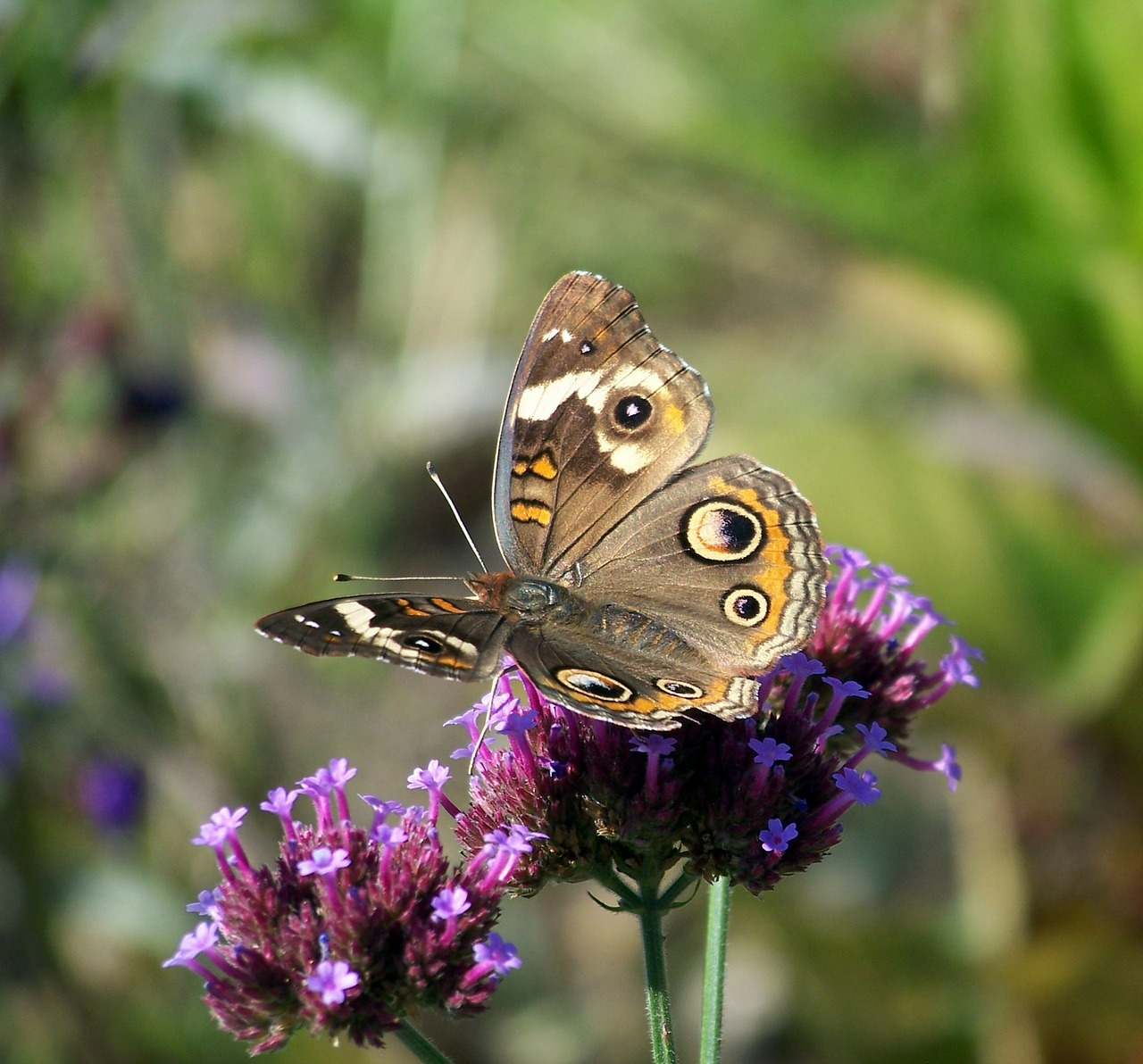 butterfly-219945-1280.jpg