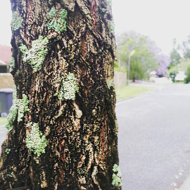 moss-on-a-tree.jpg