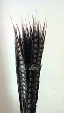 Natural - Lady Amherst Pheasant Feather 20 -25 inch