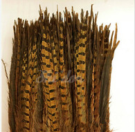 Natural - Ringneck Pheasant Feather 22-24 inch