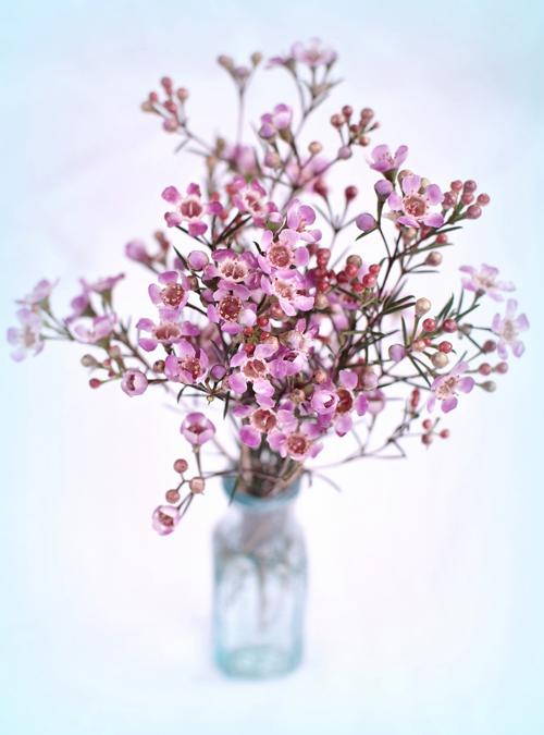The Secret Language Of Florists Albuquerque Florist