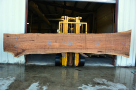 TX Pecan Live Edge Wood Slab - TXP0201