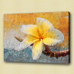 Flower,Florals, flowering plants ,Plantae,Plumeria