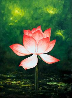 Floral,Flower,Lotus