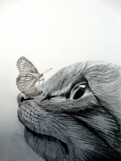 CAT, BUTTERFLY, PLAY,LIFE IS LIKE A BUTTERFLY,ART_1664_14365,Artist : SHAILEYEE  DAS,Pencil