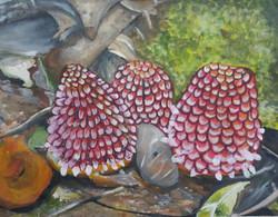 Balanophora-parasitc plant (ART_2756_19704) - Handpainted Art Painting - 18in X 14in