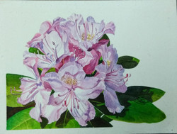 Rhododendrons (ART_3116_22144) - Handpainted Art Painting - 11in X 8in