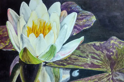 Water lily (ART_3116_22143) - Handpainted Art Painting - 8in X 5in