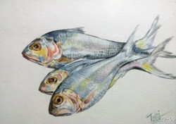 Fish (ART_2442_22419) - Handpainted Art Painting - 14in X 11in (Framed)