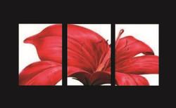 flower, red flower, hibiscus, star like flower