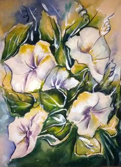 flower, flowers, blossom, white flower, white blossom, two white flower