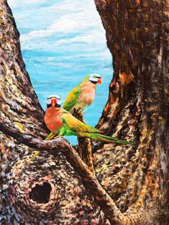 birds, parrots, pair of parrots, two parrots, multi color parrots, love birds