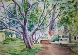 Tree,Banyan Tree,Nature,Earth Support