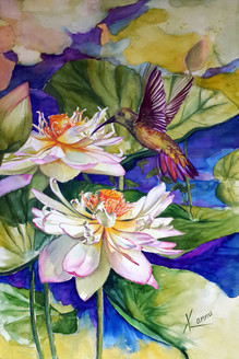 Humming Bird,Freedom to Fly and Float,small beautiful bird,Lotus flower,Floral