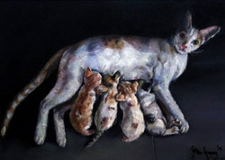 cat, cat with kittens, little kittens, mother, mother and child