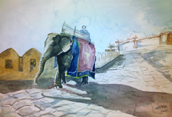 elephant,rajasthan,elephant in desert