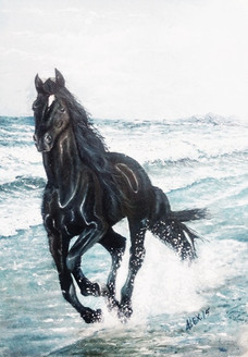 Horse,Spped,Race,Black Horse,Horse at Beach