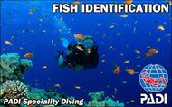 Fish Identification Course - AWARE PADI