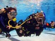 PADI Referral Course with eLearning Code - ON SALE!