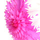 Dark pink intricate snowflake decoration for Christmas parties and celebrations