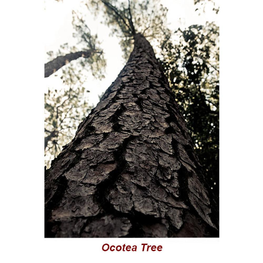 OCOTEA (Ishpink)