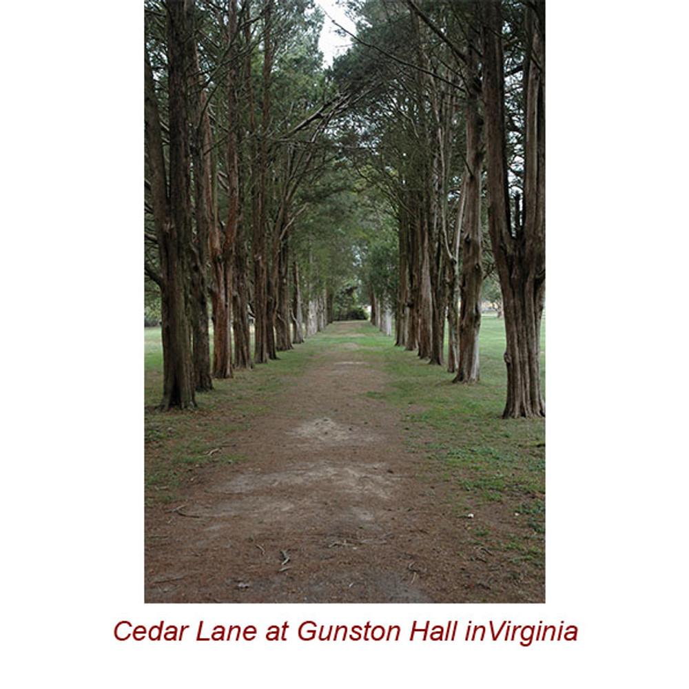 Cedarwood Virginia (Red Cedar)