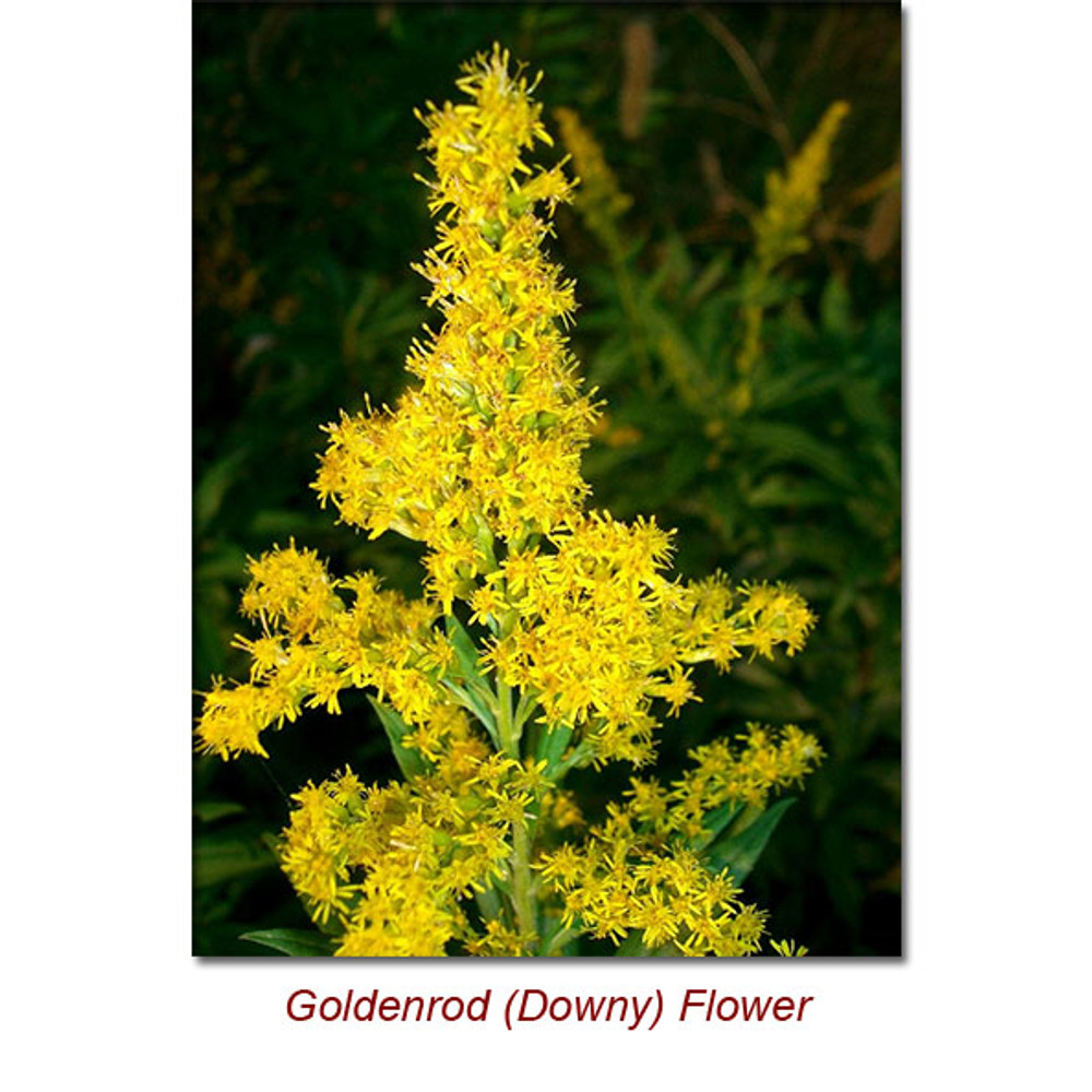 Goldenrod (Downy) Organic-5 ml