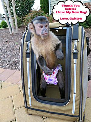 Monkey Gaitlyn likes her Celltei Pak-o-Monkey