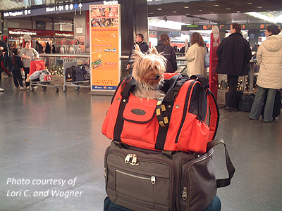 Wagner travels by air in a Celltei pet carrier