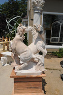 Hand Carved Marble Statuary depicting 2 Fighting Stallions. Solid white marble with veining. Base is sunset marble. Measurements: Horses are 40 high x 28 wide x 19 deep. Base is an additional 28 x 19 x 20 high