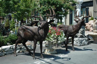 "LARGE OVERSIZED WHITETAIL BUCK IN BRONZE, NICE ANIMAL GARDEN STATUE 76"" TALL, 74"" LONG"