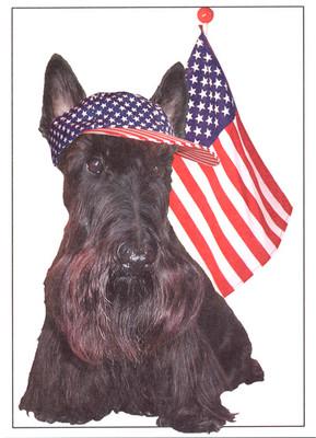 Scottie One Nation Card