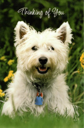 """Thinking of You"" Westie Card"