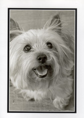 "Westie ""Happy"" Photo Card"