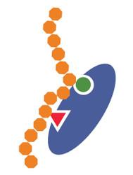 L3MBTL1 3xMBT Domain, Recombinant Human