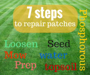 7 Lawn Care Tips Guaranteed To Help You Grow A Healthier Lawn   Great  Garden Supply