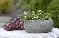 Campania Stone kira planter.
